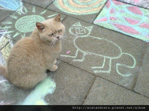 """【可愛的貓貓】喵 """"你才長這樣!你們全社區都長這樣!"""