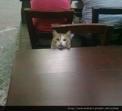 【可愛的貓貓】喂!老闆,我點的魚什麼時候給我上!不要看我個子小,就可以直接無視我!