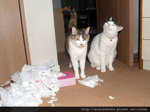 【可愛的貓貓】是他做的,是他做的!