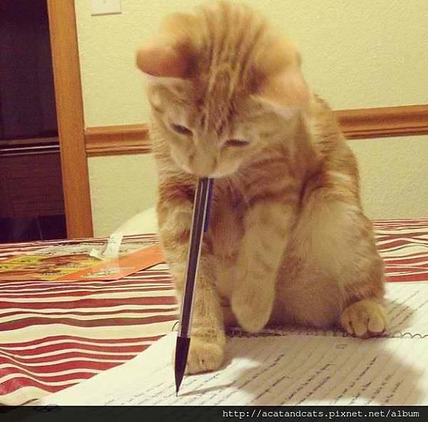 【可愛的貓貓】這邊有錯字喔