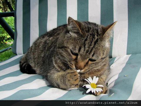 【可愛的貓貓】他愛我,他不愛我