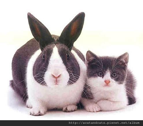 【可愛的貓貓】同父異母的兄弟~