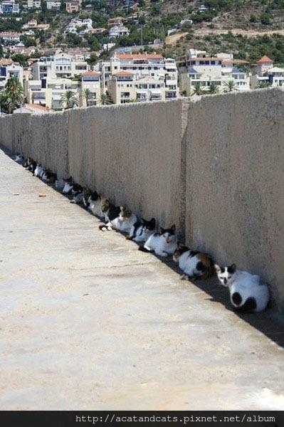 【可愛的貓貓】我們在防曬躲太陽啦!