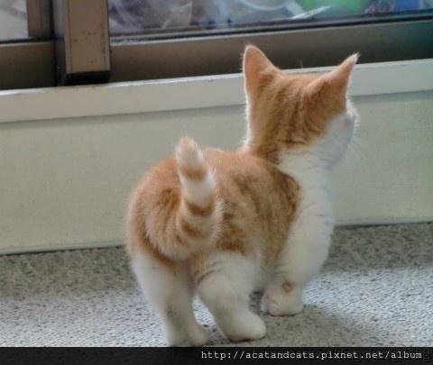 【可愛的貓貓】超級短腿可愛喵~~06