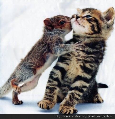 【可愛的貓貓】人家我可以鼓起了所有勇氣