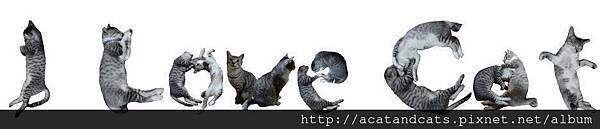 【可愛的貓貓】是阿,貓貓最可愛我超愛!