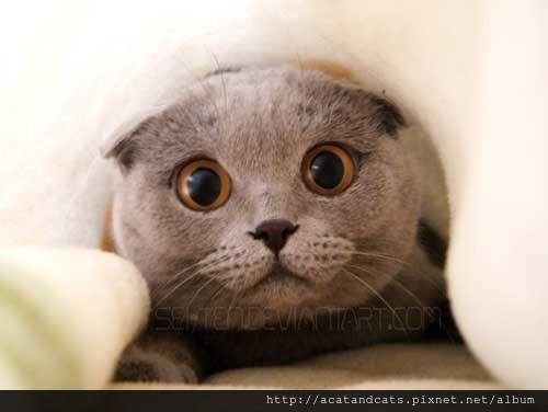 【可愛的貓貓】大眼貓
