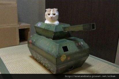 【可愛的貓貓】開戰車的貓