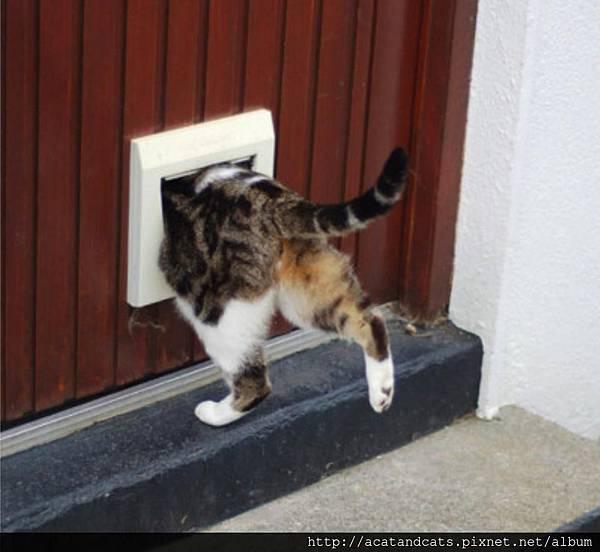 【可愛的貓貓】可愛的貓屁屁︿︿