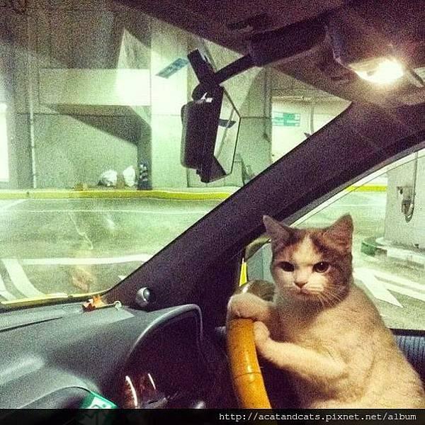 【可愛的貓貓】沒時間解釋了!快上車!!!