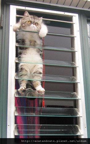 【可愛的貓貓】救命啊。。。。
