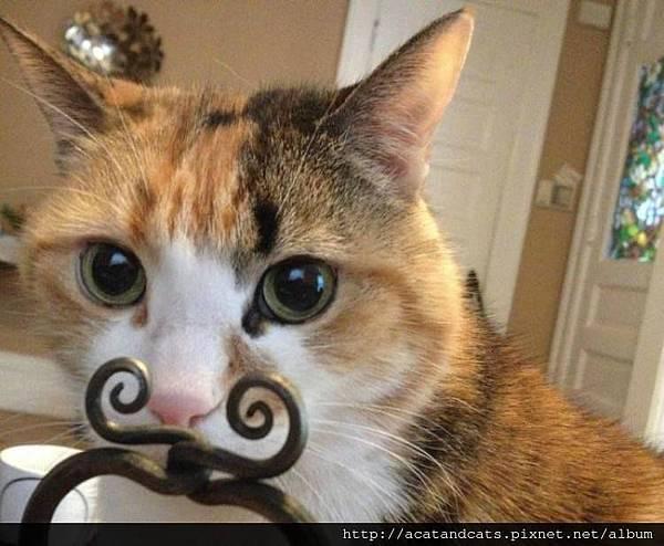 【可愛的貓貓】我是翹鬍子喵~