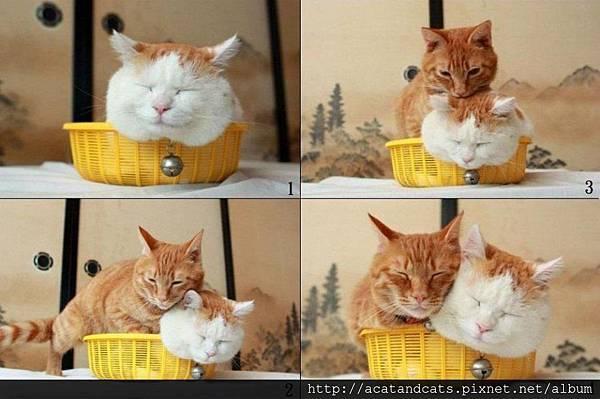 【可愛的貓貓】拍謝~借擠一下