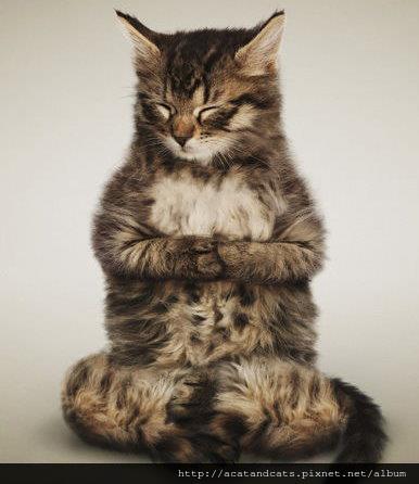 【可愛的貓貓】靜坐中勿擾
