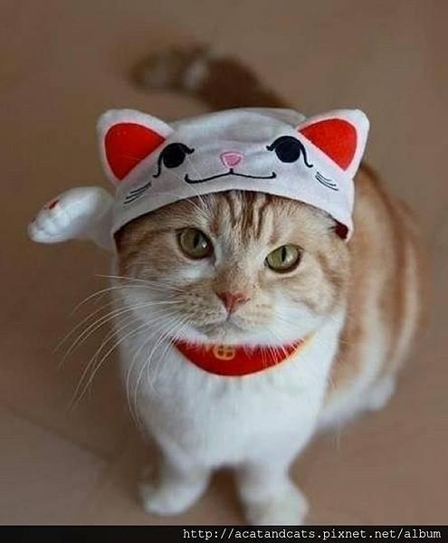 【可愛的貓貓】超級萌貓!