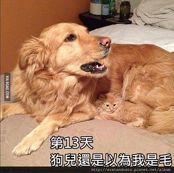 【可愛的貓貓】喵星人隱身術
