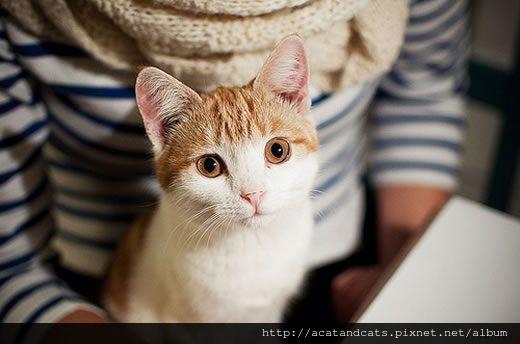 【可愛的貓貓】貓咪