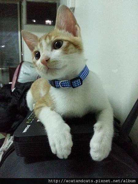 【可愛的貓貓】我最愛趴在數據機上