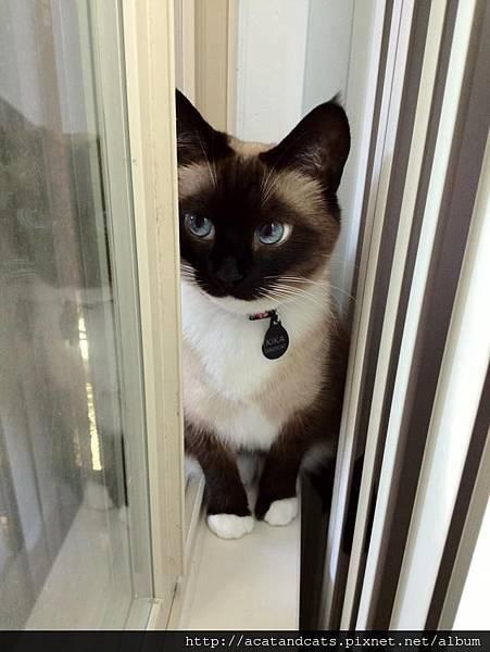 【可愛的貓貓】好萌啊!!!!!