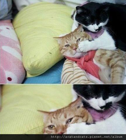 【可愛的貓貓】別哭了親愛的,我錯了好不好?