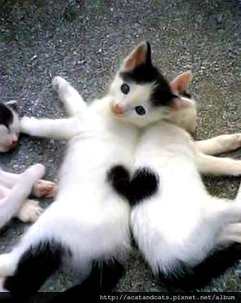 【可愛的貓貓】看我們~~合體!