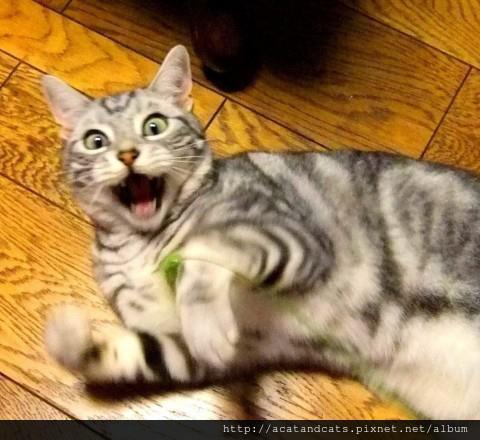 【可愛的貓貓】什麼?本大爺的飼料沒了~~還不快給我去買~~