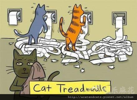 【可愛的貓貓】貓咪健身房