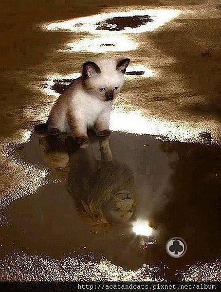 【可愛的貓貓】看見自己的無限可能