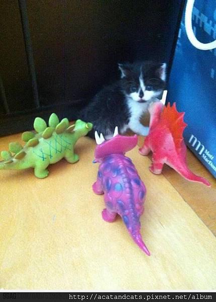 【可愛的貓貓】可憐的小貓被包圍了~誰能出面解救牠~