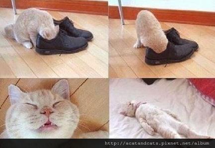 【可愛的貓貓】好奇害死貓呀!
