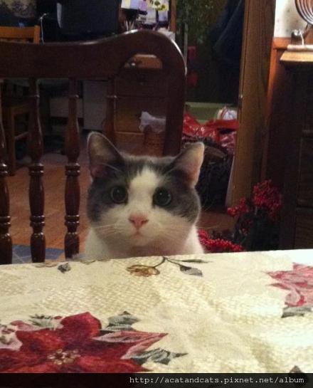 【可愛的貓貓】每次都用這招要吃的