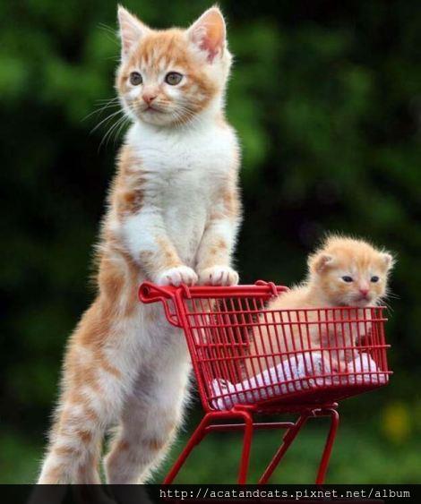【可愛的貓貓】散步~