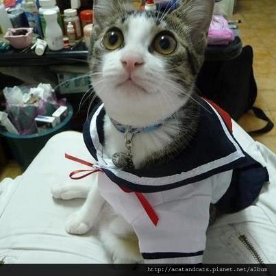 【可愛的貓貓】大眼貓7