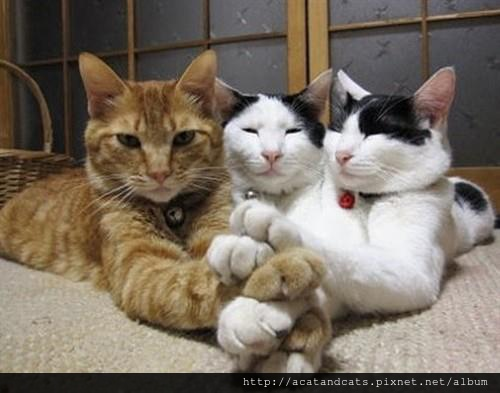 【可愛的貓貓】加油加油加油~~~