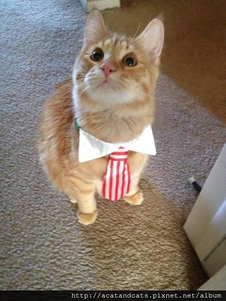 【可愛的貓貓】我是小紳士,請跟我約會吧!!!