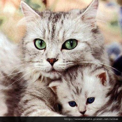 【可愛的貓貓】不可以傷害他,他是我的寶貝兒子。