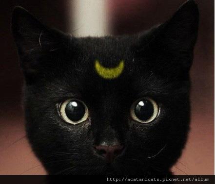 【可愛的貓貓】包公喵要審案囉