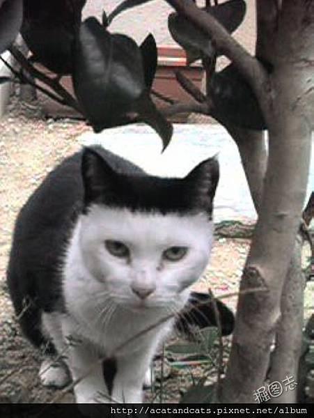 【可愛的貓貓】我夠拉風吧!