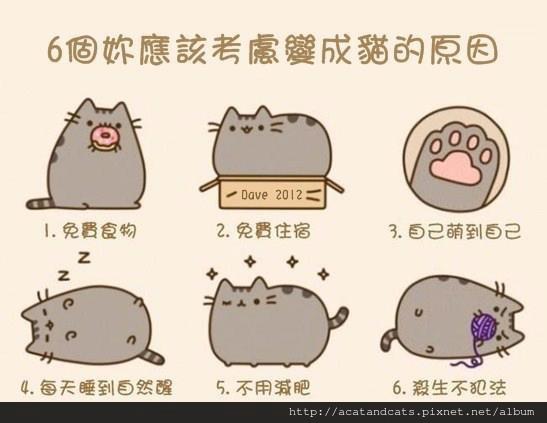 【可愛的貓貓】六個你應該考慮變成貓的原因