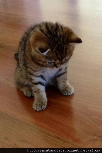 【可愛的貓貓】少年喵喵的煩惱~~