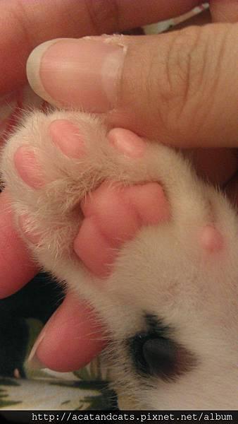 【可愛的貓貓】看起來好好吃的腳腳