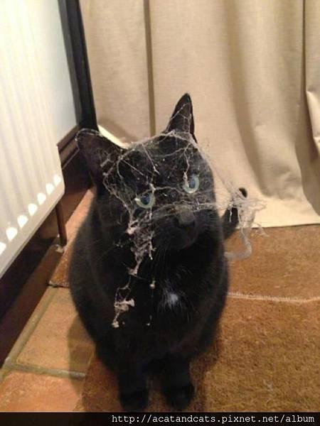 【可愛的貓貓】救命阿,誰幫幫我阿~~
