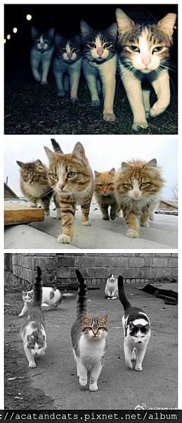 【可愛的貓貓】走吧!我們去幹架