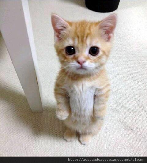 【可愛的貓貓】麻麻說我把午餐打翻了要罰站30分鐘