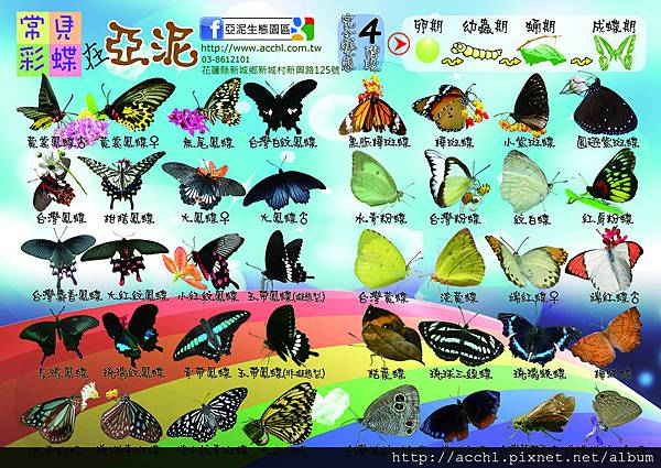 2012蝴蝶圖卡