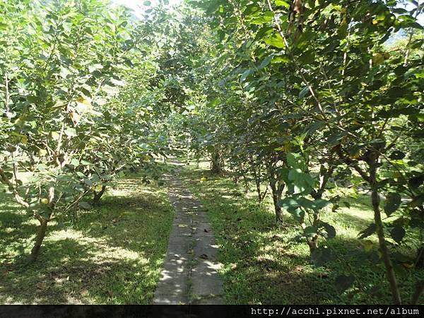 水果區的桑樹步道 (Large)