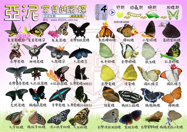亞泥生態園區2010蝴蝶圖卡.jpg