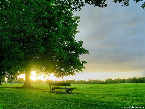 green-grass-and-big-tree-92456
