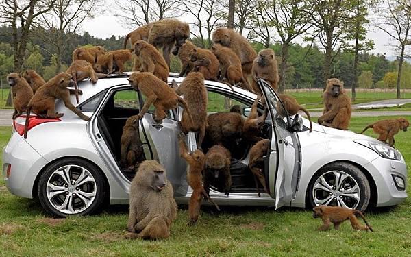 monkeycar