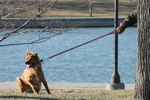give-him-time-to-get-used-to-the-leash_7-tips-on-teaching-your-dog-to-walk-on-a-leash (1)